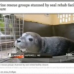 Marine Rescue Groups Stunned by Seal Rehab Facility Closure