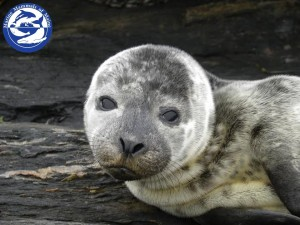Help Us Help the Seals