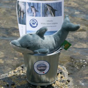 white sided dolphin adoption bucket